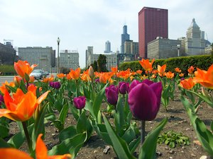 beste reistijd chicago